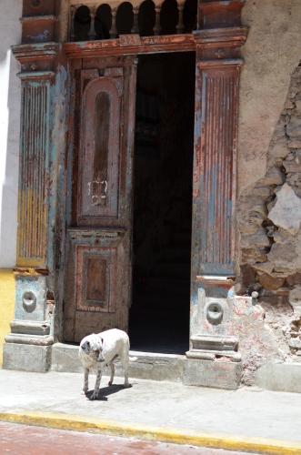 カスコアンティグオの家屋と犬