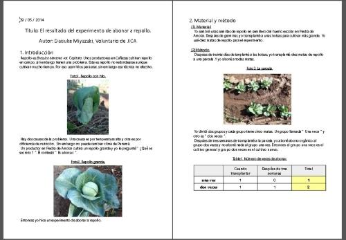 キャベツの施肥実験の報告書