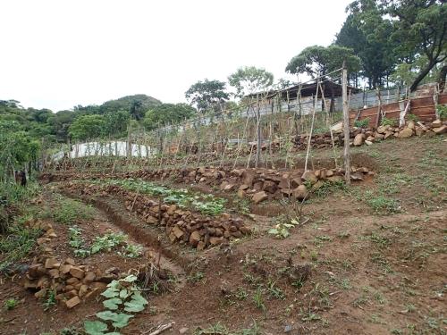 コミュニティの学校菜園