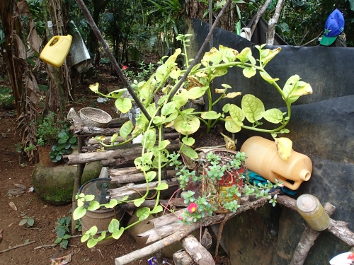 ツルムラサキ袋栽培