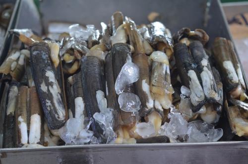 パナマの市場の貝
