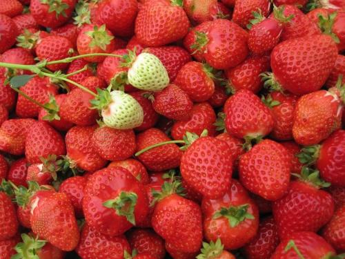 無数のイチゴと白苺