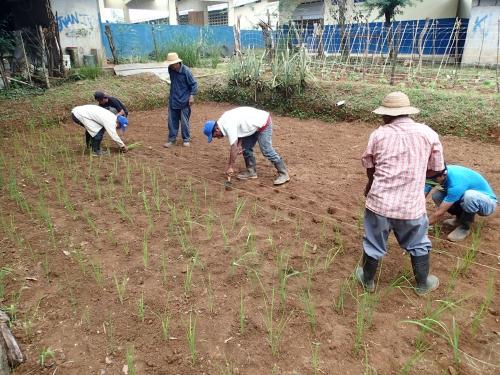 稲を移植する村人