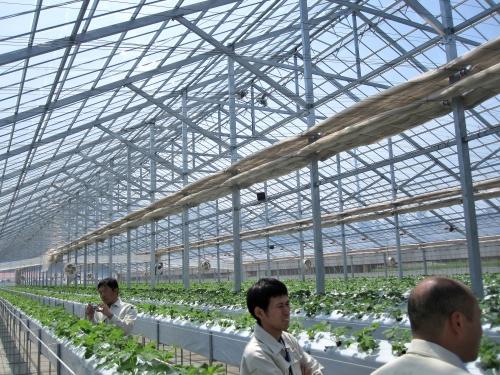 イチゴ農家の巡回指導