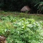24回目の無電化集落に泊まろう!学校菜園とグループ農園の視察