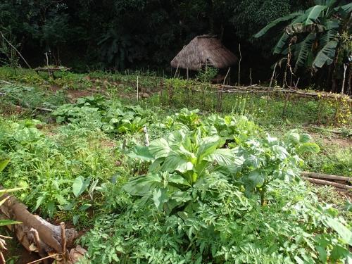 グループ農園の写真