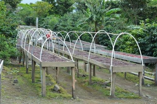 コーヒーの自然乾燥施設