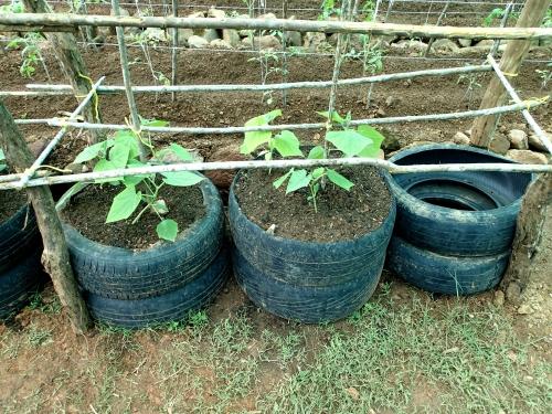 タイヤを使った栽培