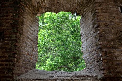 パナマ・ビエホ遺跡から見た森