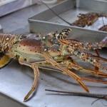 パナマシティの新観光名所!JICAの援助でできた水産市場と魚介類レストラン街が素晴らしい!