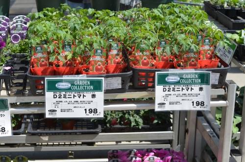 ホームセンターのトマトの苗