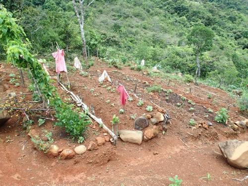 村の家庭菜園
