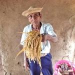 20回目の滞在調査にグアテマラの青年海外協力隊・栄養士隊員も同行し、学校菜園と稲品種を調査した。