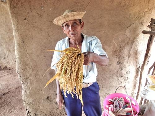 村人と稲穂