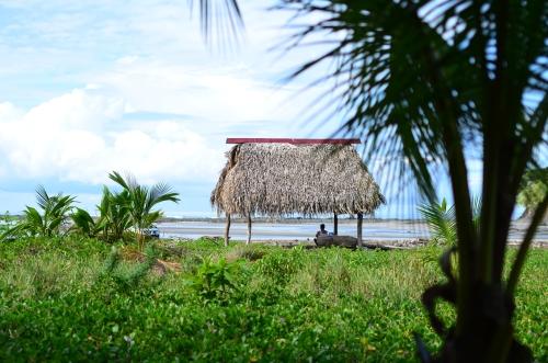 海岸に建つ伝統的なヤシの葉の小屋