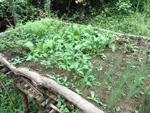 無電化集落の苗床