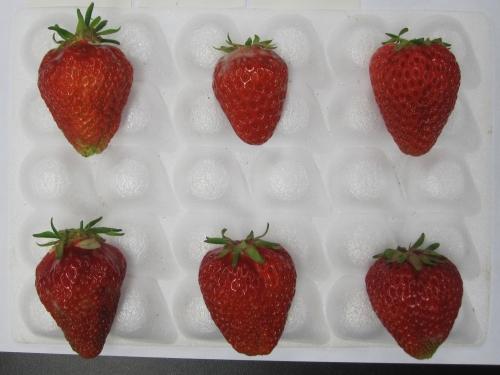紅ほっぺの果実