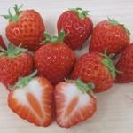 イチゴの甘い果実の見分け方&おすすめの品種と苺の美味しい食べ方、苗作りのコツ、家庭菜園の簡単な育て方