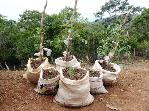 袋栽培のデモ