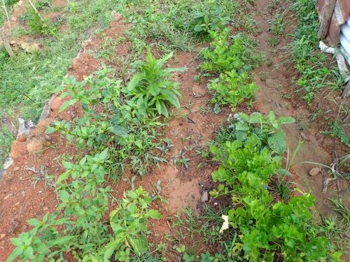 雑草だらけの学校菜園