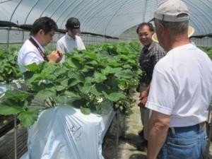 青年海外協力隊の農業・農村コミュニティ開発系隊員は必見!マニュアル化した瞬間、その農業技術は死ぬ