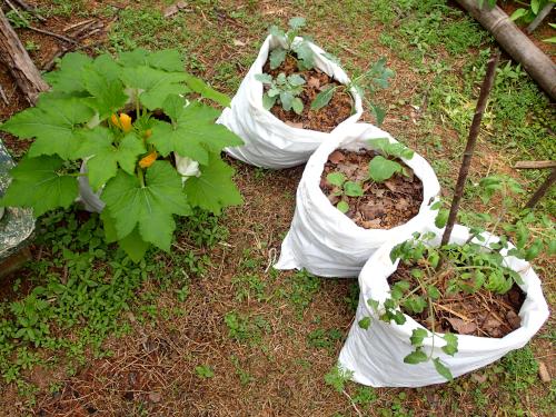 家庭菜園向けの袋栽培