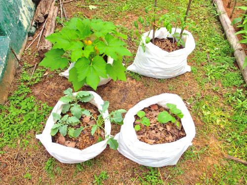 4種類の野菜の袋栽培