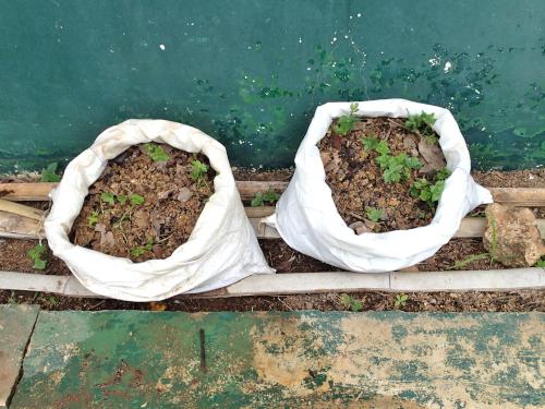 葉物野菜の袋栽培
