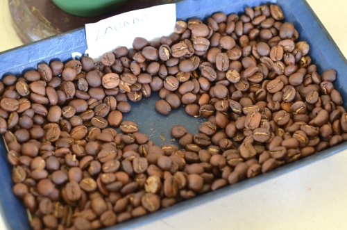 パナマのレリダ農園の焙煎したてのコーヒー豆