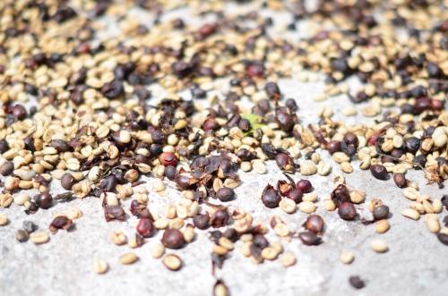 コンクリートの上に播かれたコーヒー豆