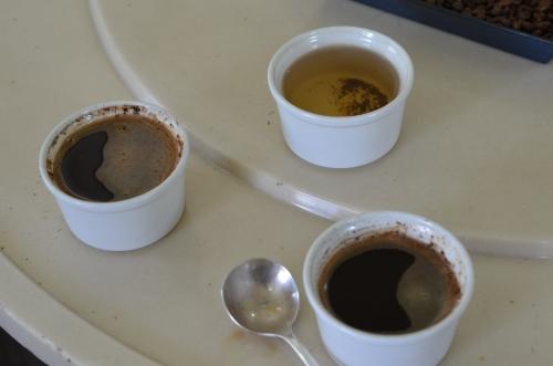 コーヒーのテイスティング体験