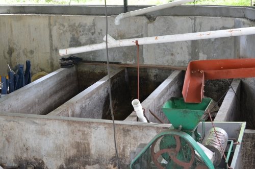 コーヒーの果実を発酵させる場所