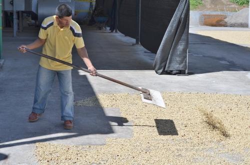 コーヒー豆工場で働く少数民族の職員