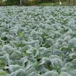 【エセ科学に騙される素人】ネットで農薬を調べまくる有機農業信者さんも、自分が何を知らないのかまでは知らない