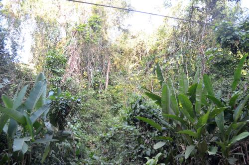 コスタリカのジャングルの写真