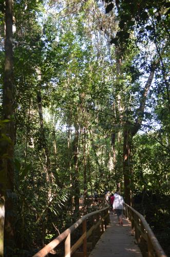 コスタリカの熱帯雨林