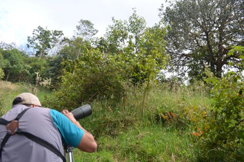 ケツァールを野鳥観察用望遠鏡で見る