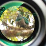 幻の鳥ケツァールの写真!水曜どうでしょうも取材したコスタリカで撮影