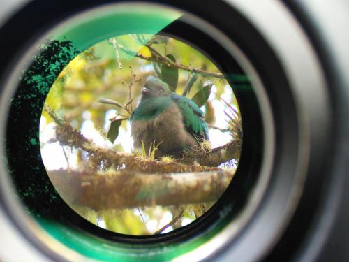 スマホで野鳥を撮影する裏技