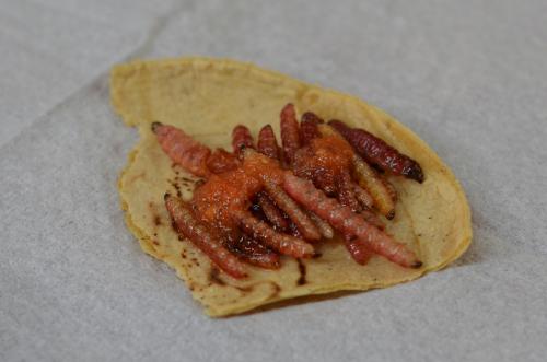 芋虫チニクイルのタコス