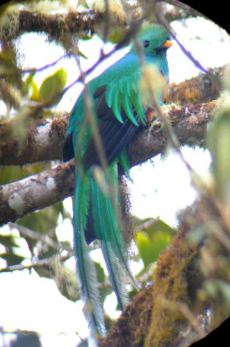コスタリカで撮影した幻の鳥ケツァール