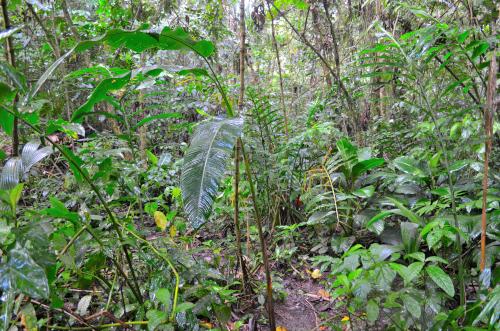 コスタリカのジャングル