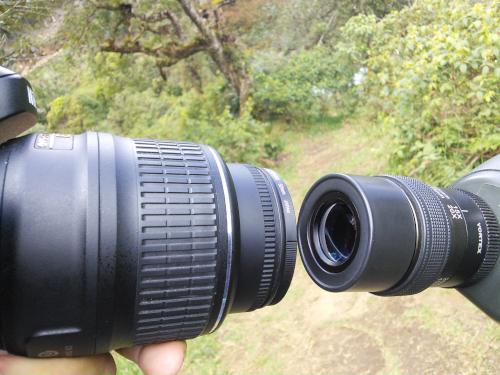 野鳥をスマホで撮影する方法