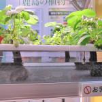 水耕栽培の野菜の育て方とメリット・デメリット!LED植物工場の問題点も