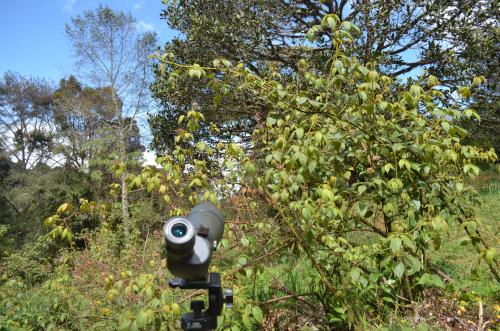 ケツァールを見る野鳥観察用望遠鏡