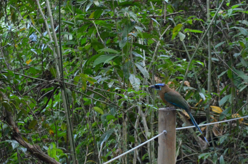 マヌエル・アントニオ国立公園の野鳥
