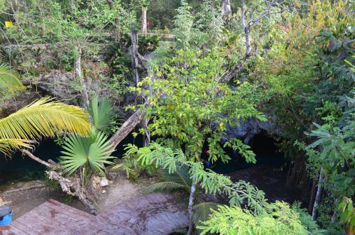グランセノーテ内には植物が生い茂っている