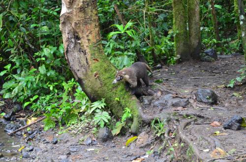 コスタリカの野生動物