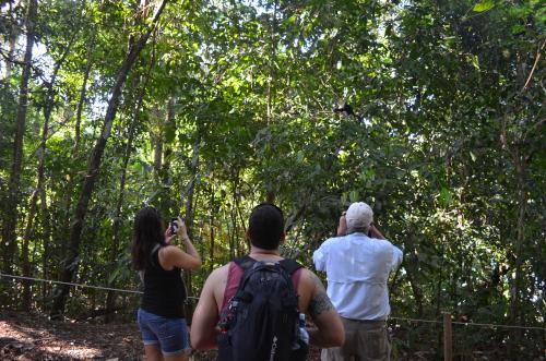 野生動物を探す観光客