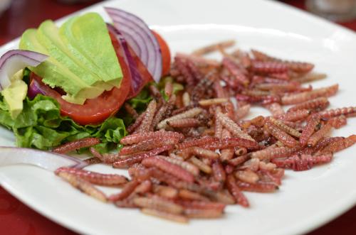 Comida de Chinicuil gusano de maguey